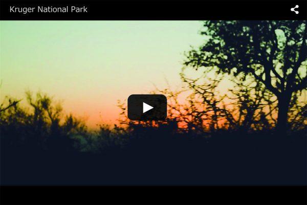 Kruger National Park / クルーガ国立公園 / 南アフリカ旅行 / サファリ