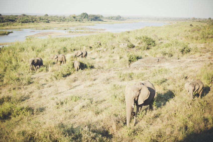 クルーガ国立公園〜ネルスプリット。旅の記録1日目。 南アフリカ陸路の旅
