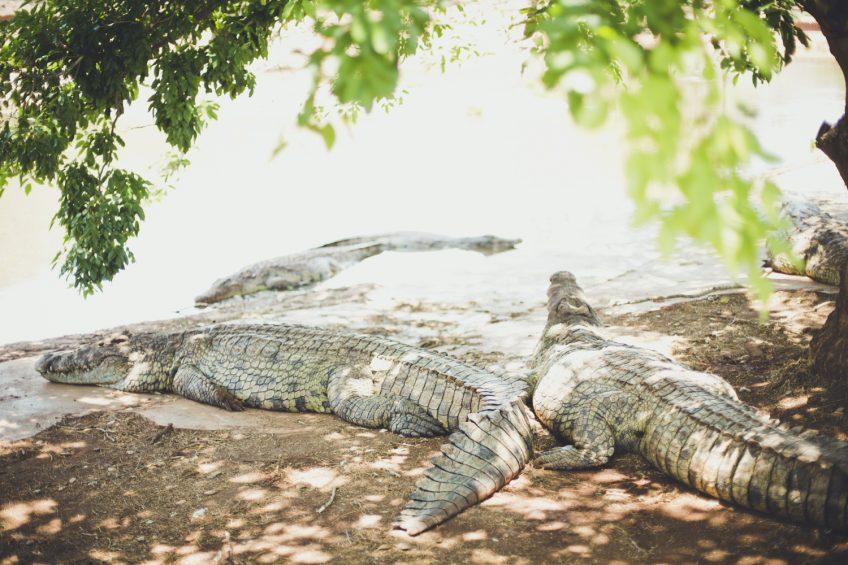 ワニ養殖場 モザンビーク珍スポット